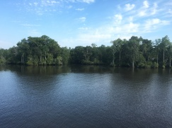 Beautiful Wacamaw River.