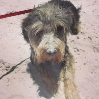 Sandy pup.